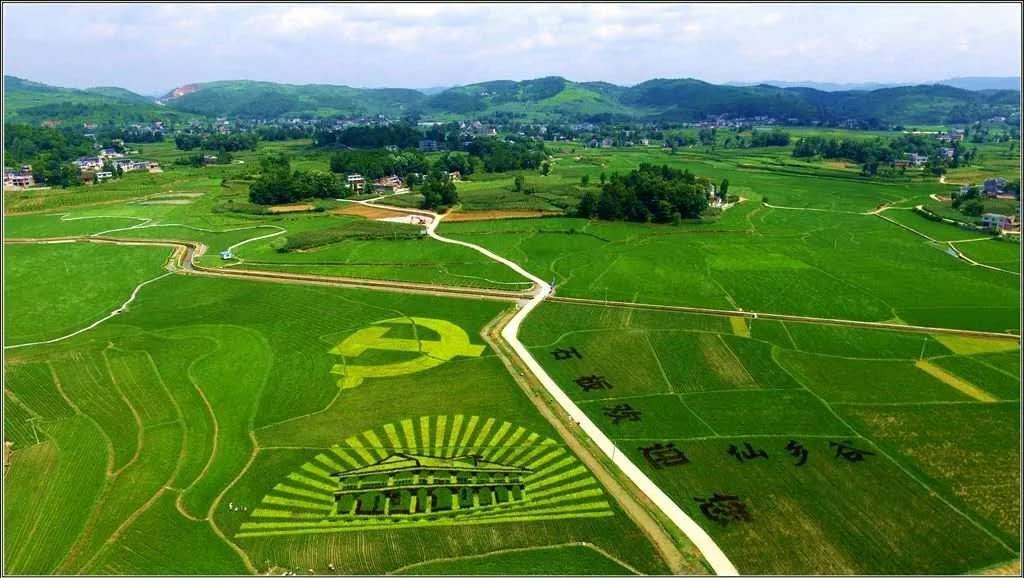 我院彩色稻助推贵州遵义播州区石板镇首届彩稻文化节开幕