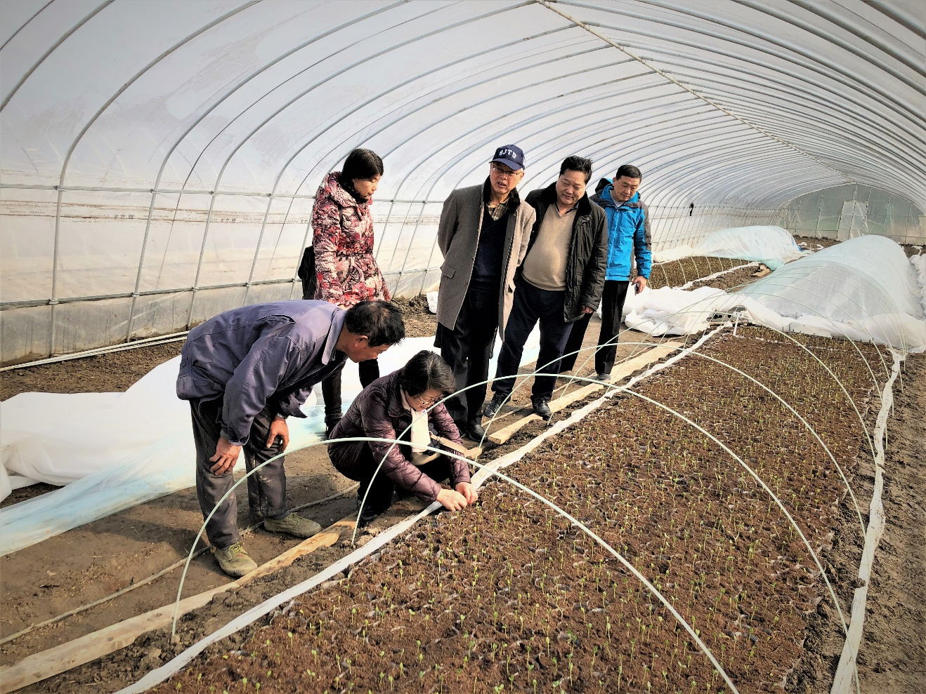 园艺所科研人员赴金山基地指导春播西瓜育苗工作