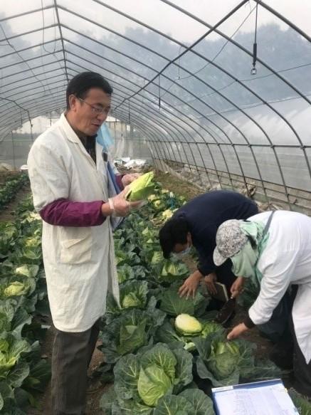 园艺所举办越冬春甘蓝新品种考评活动