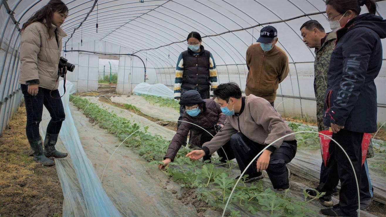 园艺所科研人员赴金山基地开展西瓜生产调研和指导