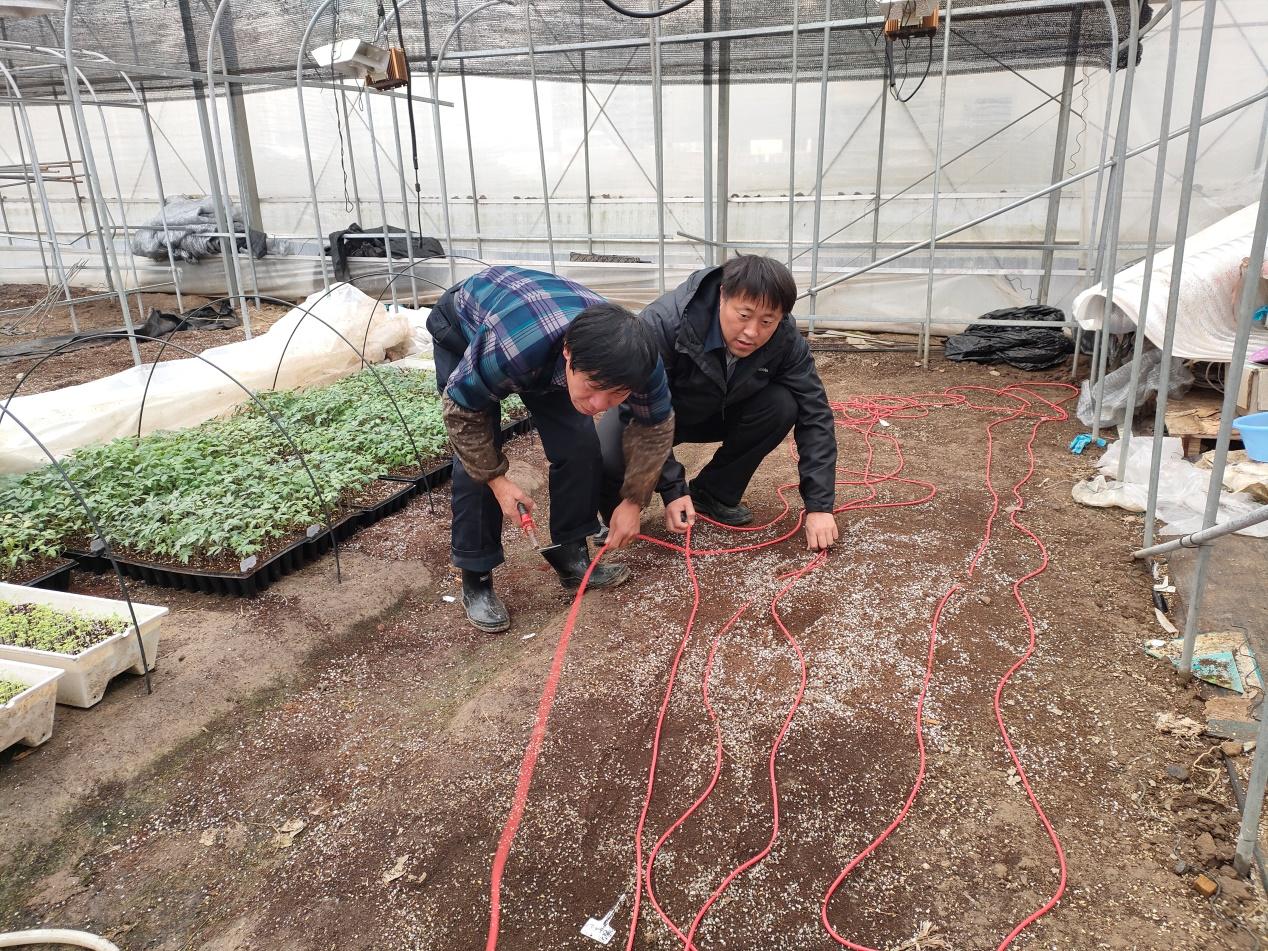 应对极端冻害天气,园艺所专家在行动