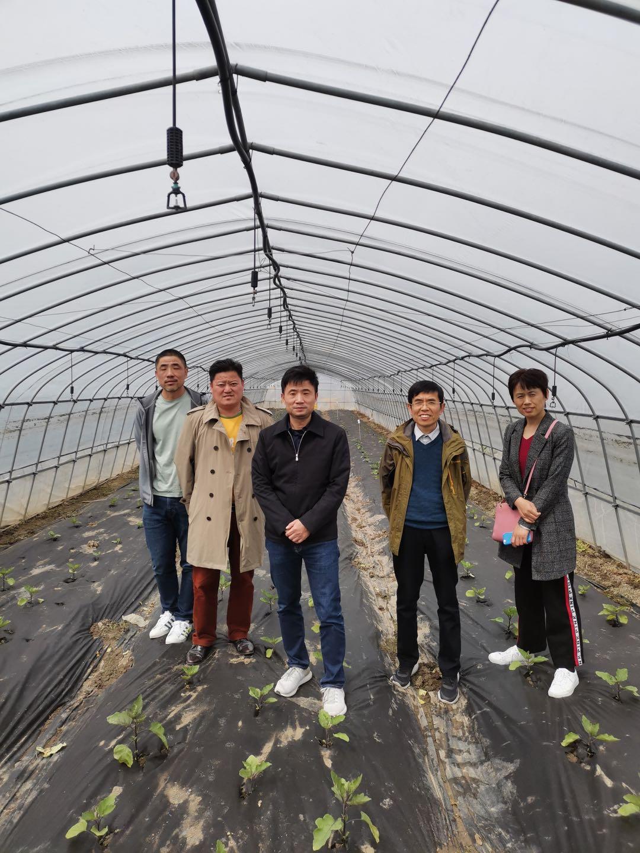 园艺所科技人员赴嘉定区调研茄子新品种的种植情况