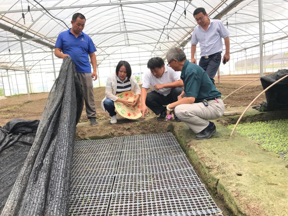 """绿叶菜体产业技术体系专家赴基地调研""""夏淡""""蔬菜生产"""