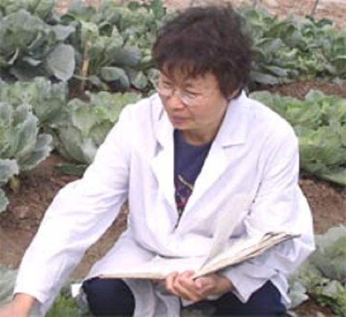 朱玉英 研究员 叶菜内蔬菜新品种选育、栽培