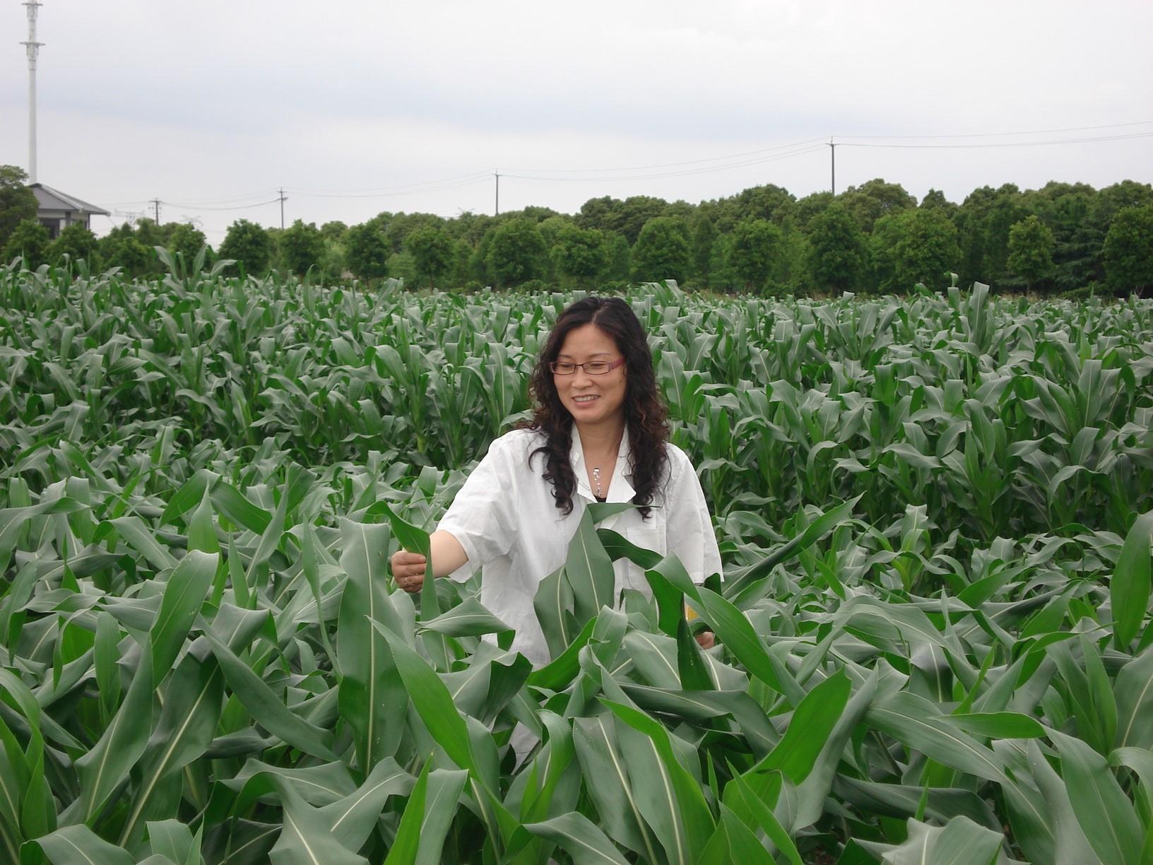 沈雪芳 研究员 玉米遗传育种、栽培和分子生物学